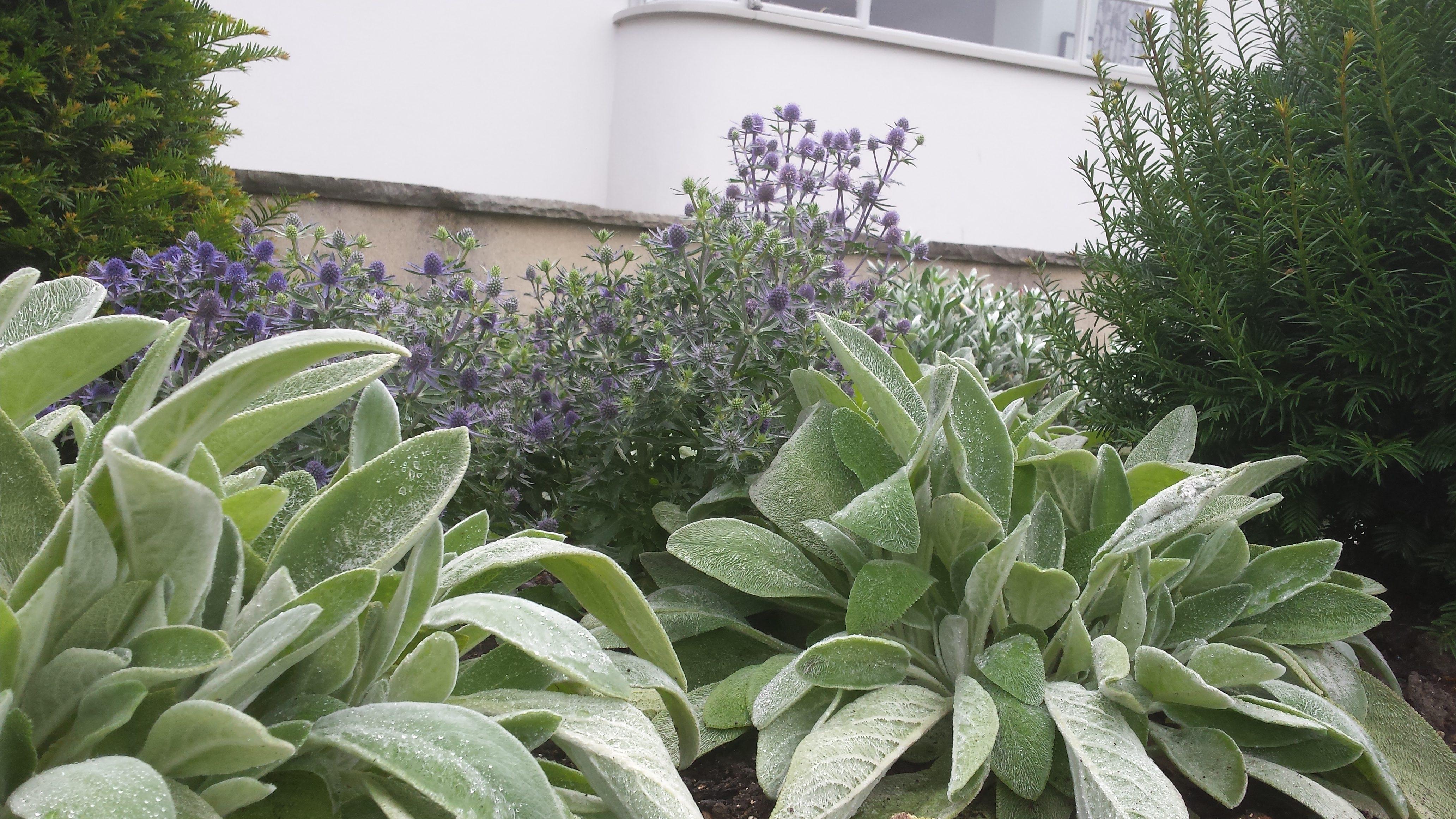 Minimalist planter design, Shaftesbury, Dorset